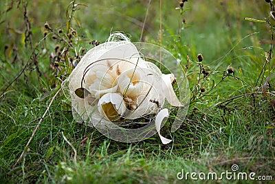 White wedding bouquet in green grass
