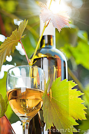 White Wine Bottle, Young Vine And Glass Royalty Free Stock Photos - Image: 22900898