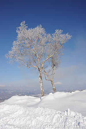 White winter landscape with a snow-clad tree in Ho