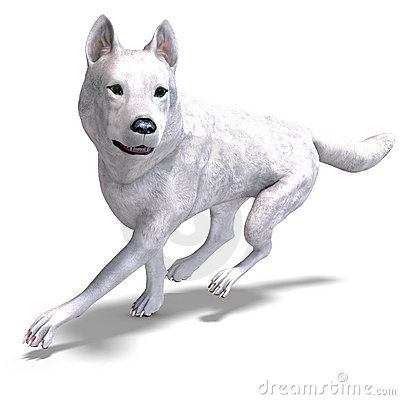 White Wolf. 3D rendering with clipping path and