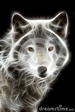Free White Wolf Royalty Free Stock Photos - 5806988