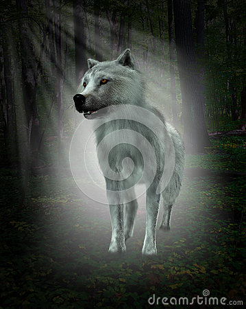 Free White Wolf, Forest Illustration Royalty Free Stock Photography - 61999997