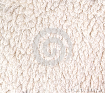 White woolly sheep fleece for background