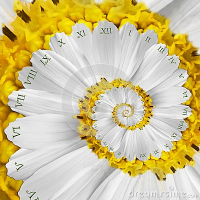 Free White Yellow Flower Surreal Clock Abstract Fractal Spiral. Floral Watch Clock Unusual Abstract Texture Fractal Background Stock Photo - 105117690
