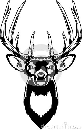Free Whitetail Deer Head Royalty Free Stock Photography - 43436427