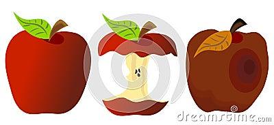 Whole Eaten and Rotten Apple