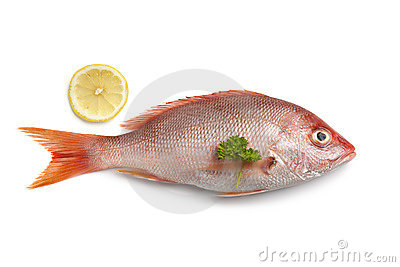 Whole fresh red snapper