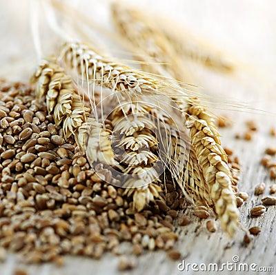 Free Whole Grain Wheat Kernels Closeup Stock Photos - 15914913