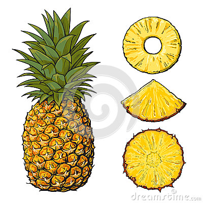 Free Whole Pineapple And Slices - Peeled, Unpeeled, Wedge, Vector Illustration Stock Photo - 84854890