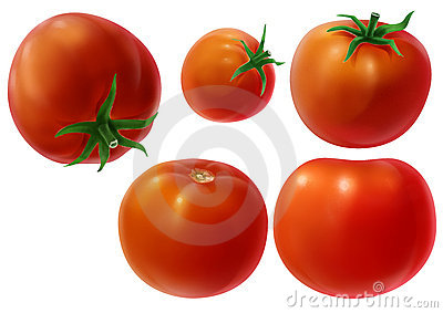 Whole tomatoes illustration