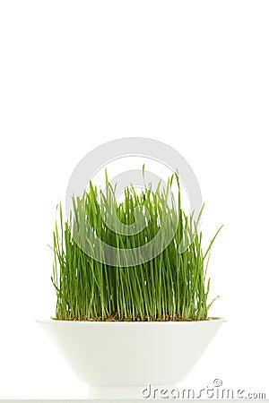 Free Whole Wheatgrass Royalty Free Stock Image - 7451856