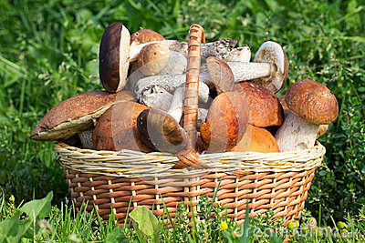 Wicker basket with mushrooms