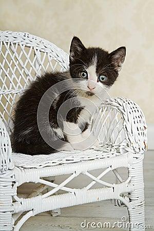 Wicker Kitty