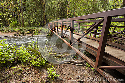 Wide angle photo of Metal Nature Bridge end near Marymere Falls, Olympic National Park