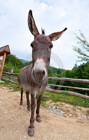 Wide Angle Shot Of Donkey Stock Photo - Image: 22660970