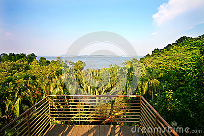 Wide angle view from forest watch tower at Singapo