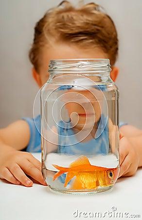 Wide eyed scared goldfish