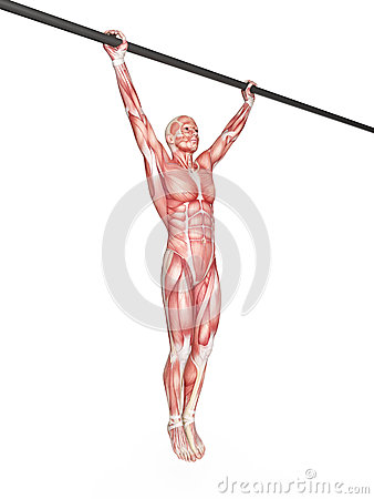 Free Wide Grip Pull Ups Stock Image - 57003261