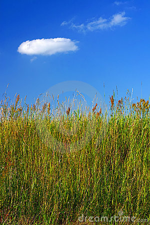 Wiesengras und ein blauer Himmel