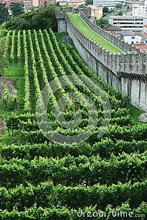 Wijngaarden onder de borstwering in Bellinzona.