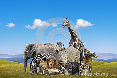 Group of wild animals together - photo#5