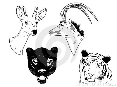 Wild animals heads