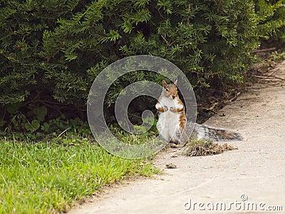 Wild animals.Squirrel.