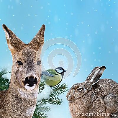 Wild animals at winter time