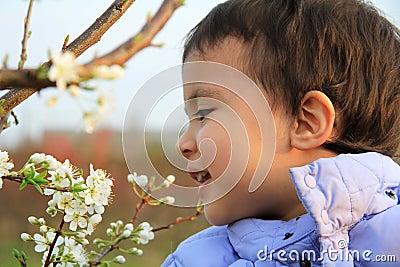 Wild apple flowers