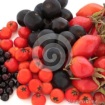 Wild Autumn Fruit
