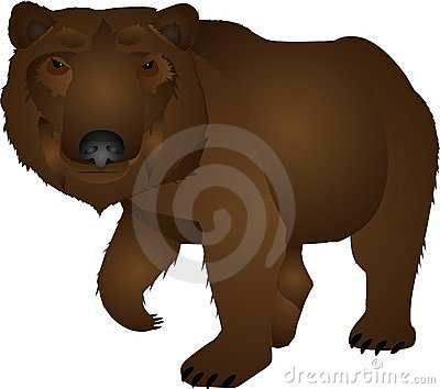 Wild bear illustration