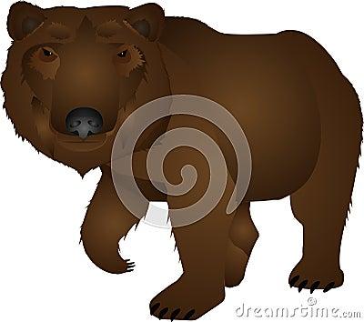Wild bear illustration