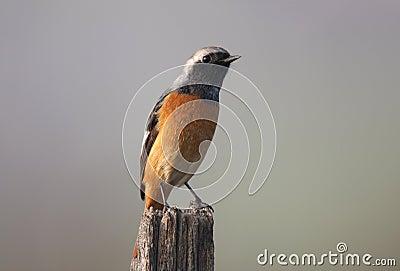 Wild bird on branch