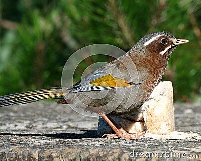 Wild bird on ground