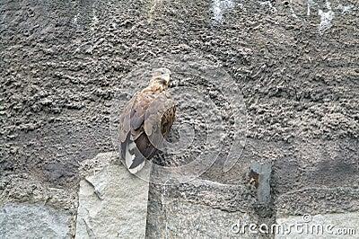 Wild bird on a rock