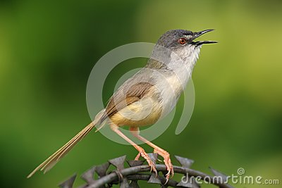 Wild bird on steel wire