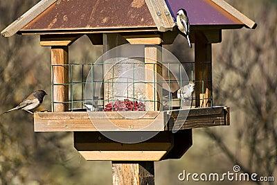 Wild Birds in Winter on Feeder