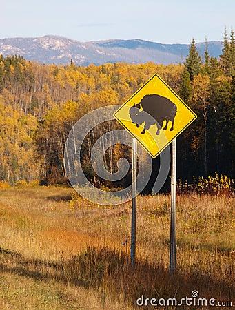 Free Wild Bison Road Sign Stock Photos - 106867393