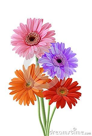 Wild blomma