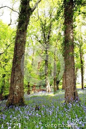 Wild blue wood