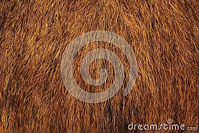 Wild boar fur