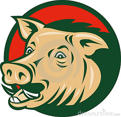 Wild boar or razorback pig hog