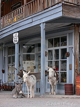 Wild Burros along Route 66 in Oatman Arizona