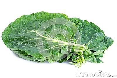 Wild Cabbage