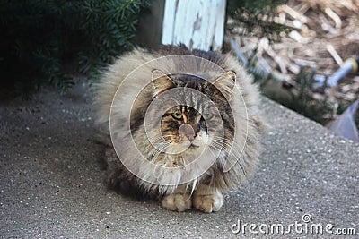 Wild Cat Begging for Food