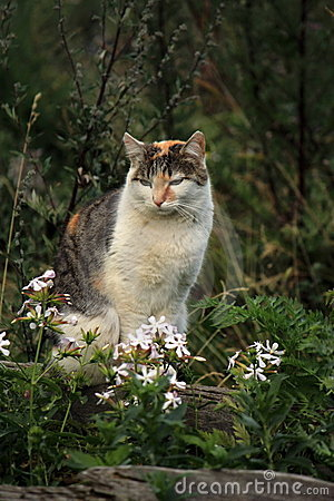 Wild cat and flowers