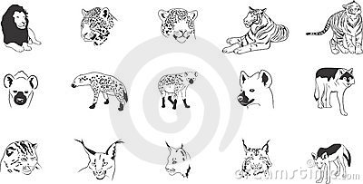 Wild cats illustrations