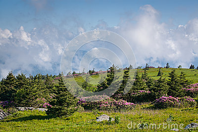 Grassy Mountain Bald Southern Appalachian Mountains Roan Highlands