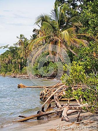 Wild coast of Costa Rica