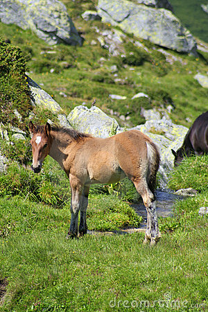 Wild colt on a brook bank